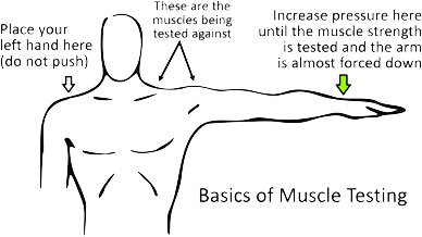 Basic Muscle Testing